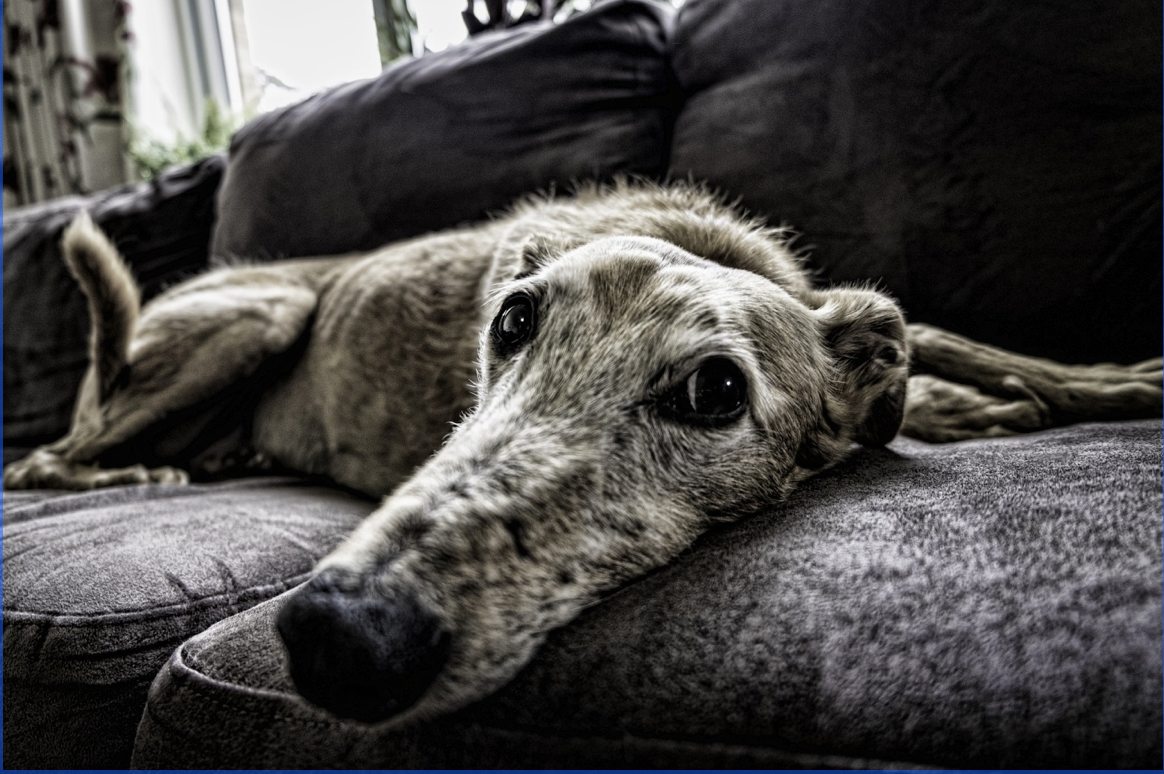 3 Common Dog Skin Conditions (And How to Treat Them)