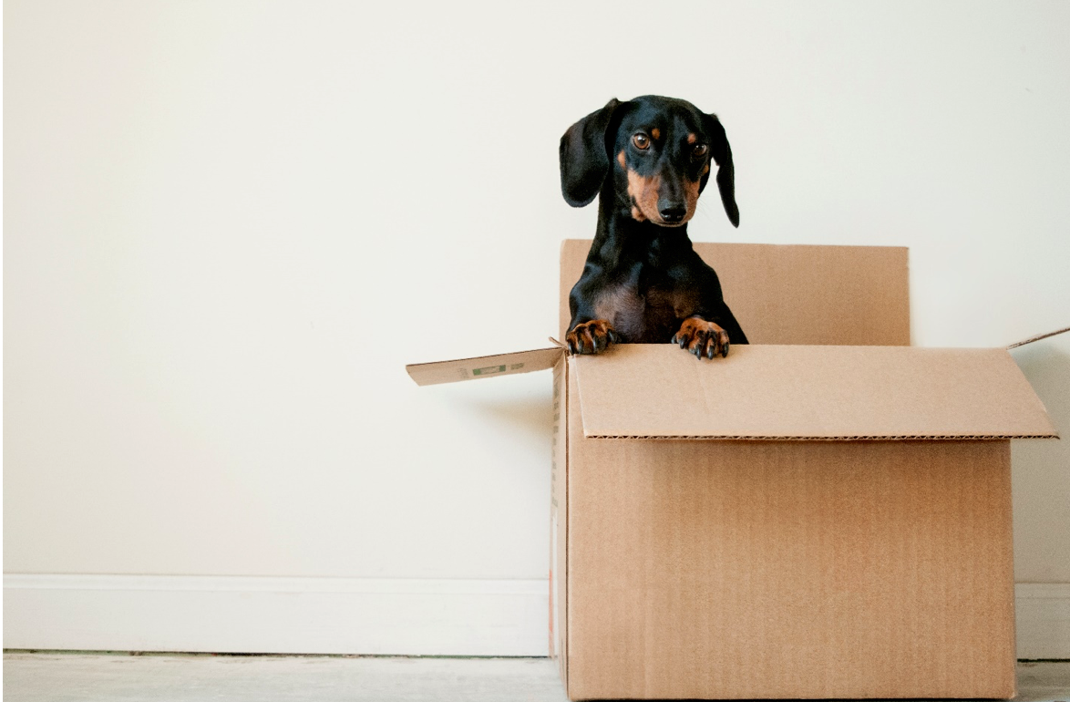 Why Everyone Should Use Pet Store Delivery Options