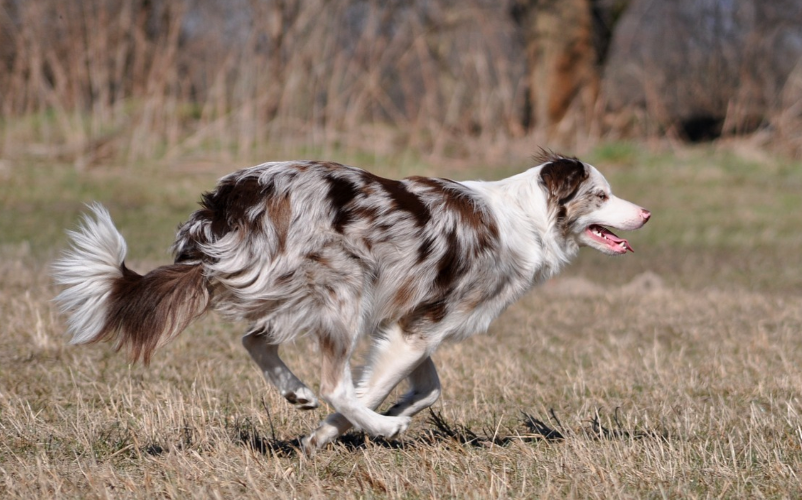 7 Spring Pet Safety Tips You Need To Know