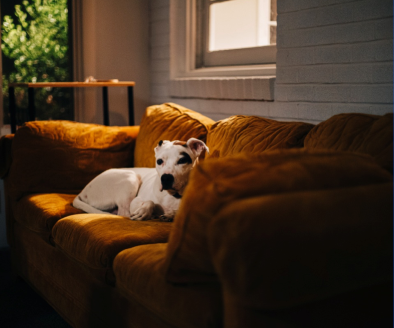 How to Keep Your House Cool for Pets on Hot Days?
