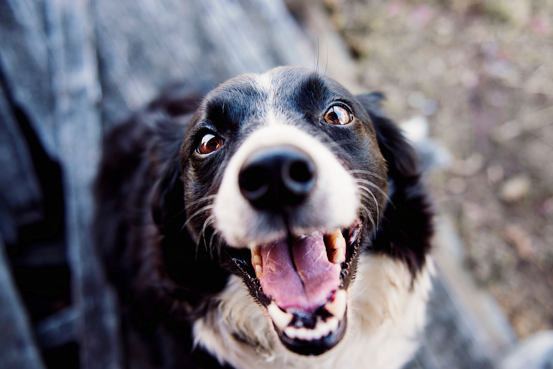 How to Control Your Dog's Odor