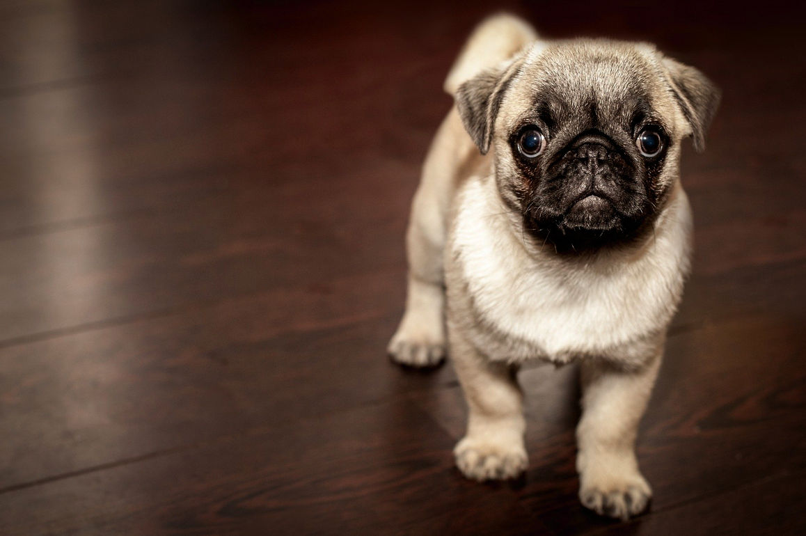 Tips for Selecting the Best Dog Breeds for Your Needs
