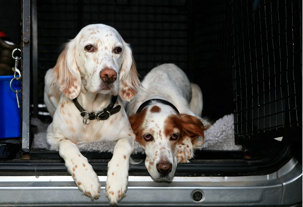 How do you keep a dog happy in a crate?