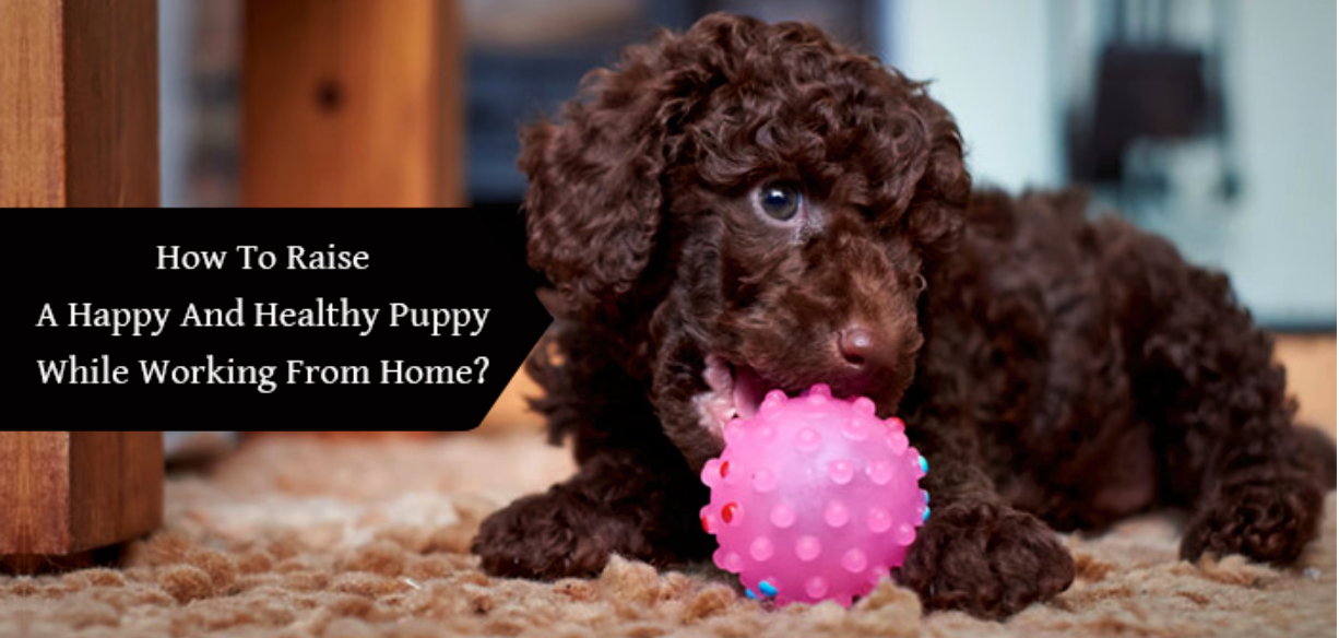How To Raise A Happy And Healthy Puppy While Working From Home?