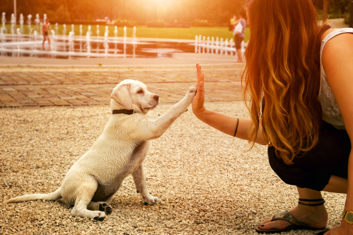7 Helpful Tips for New Dog Owners to Be Great Fur Parents