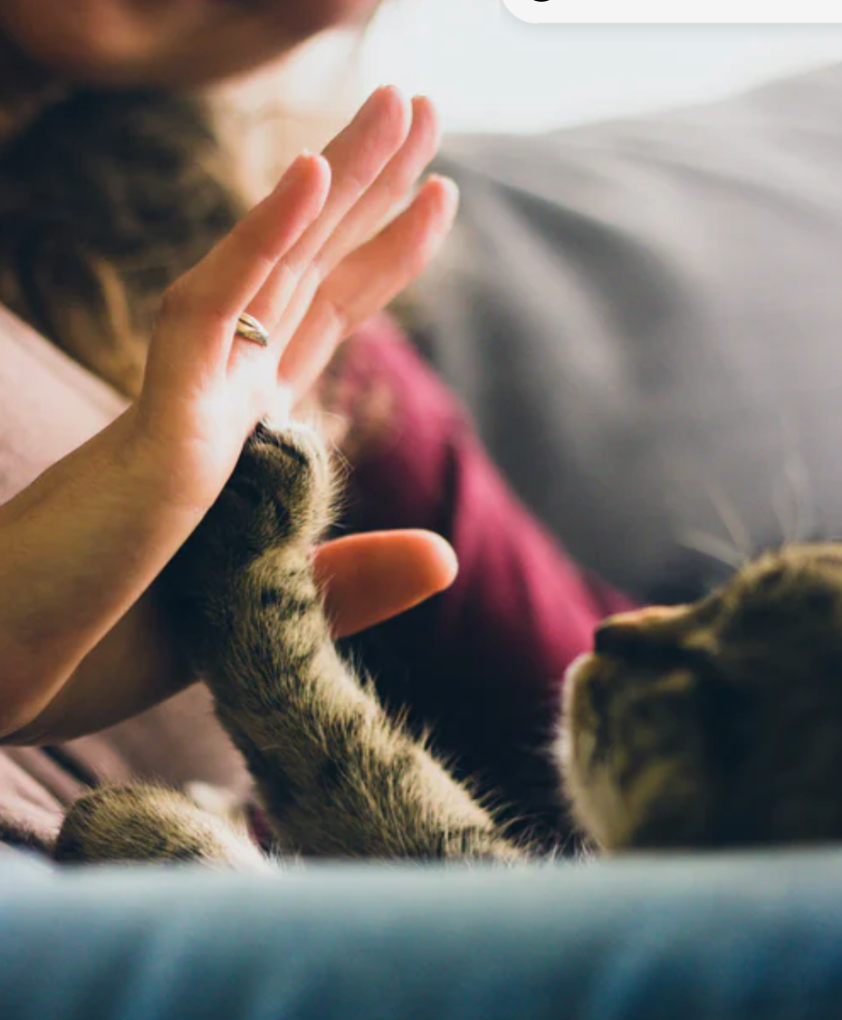 5 Pawtastic Activities to Do With Your Pet During Quarantine