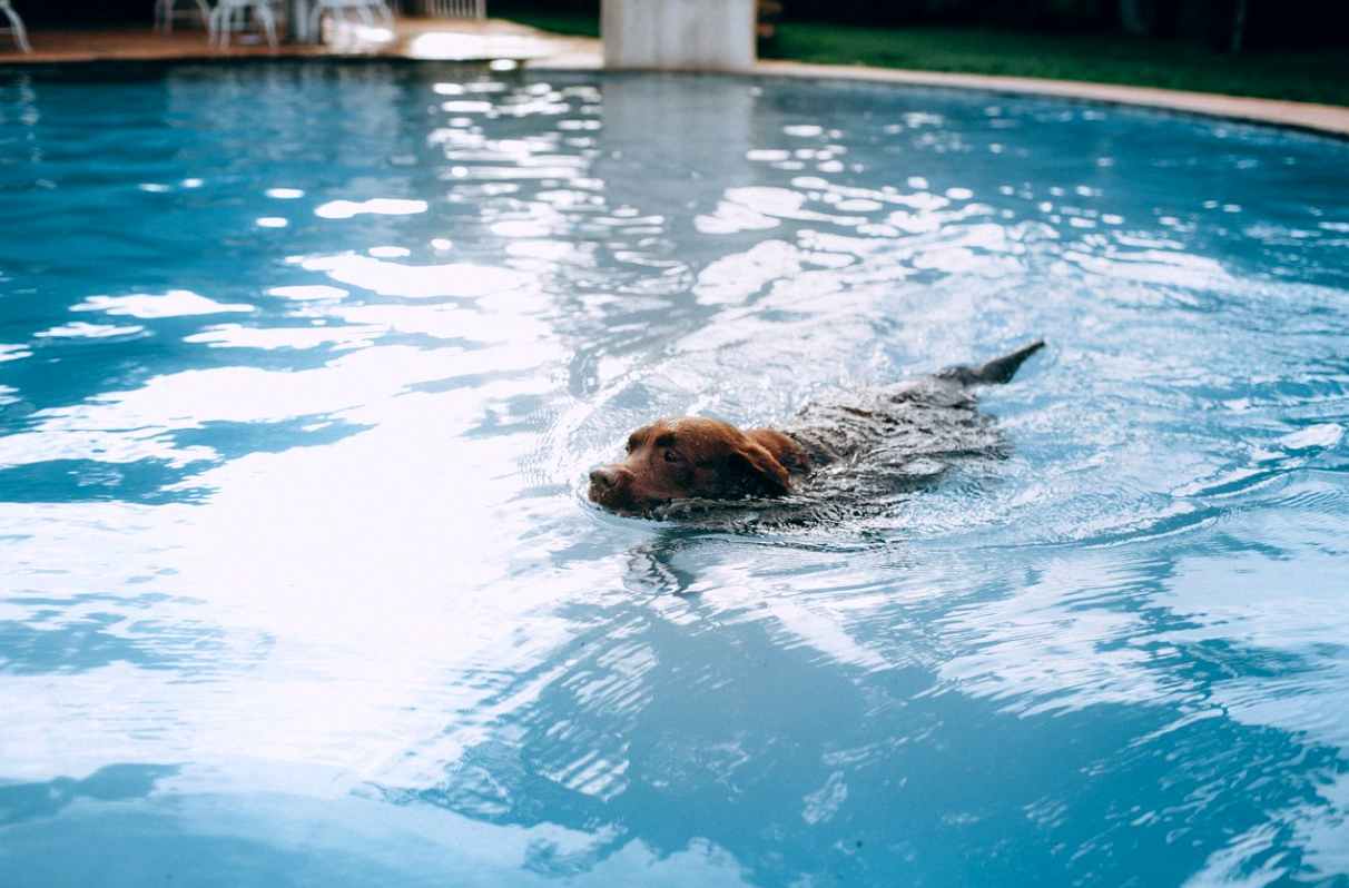 Top Tips for Swimming Dogs – Water Hazards and Safety Tips