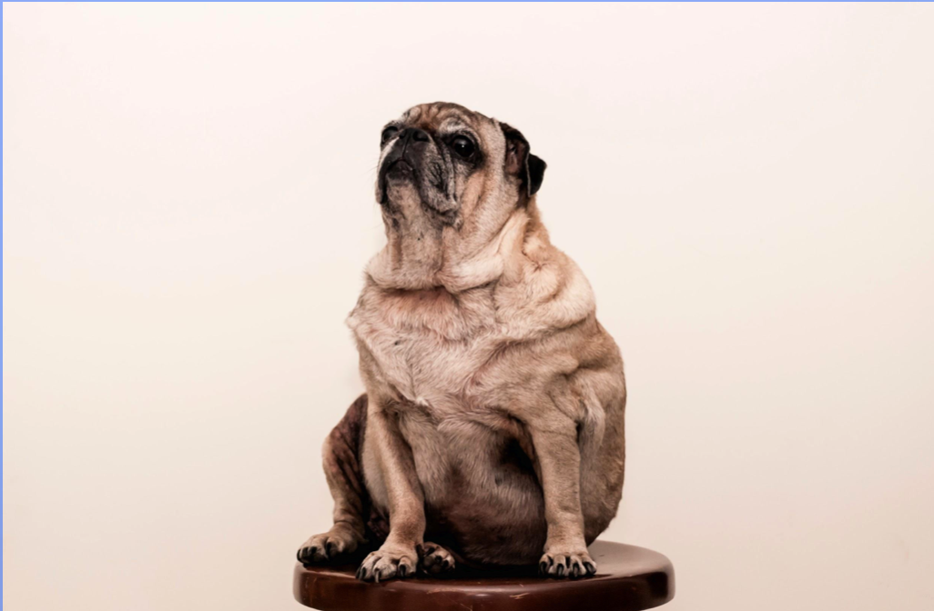 Natural Remedies for Arthritis in Dogs