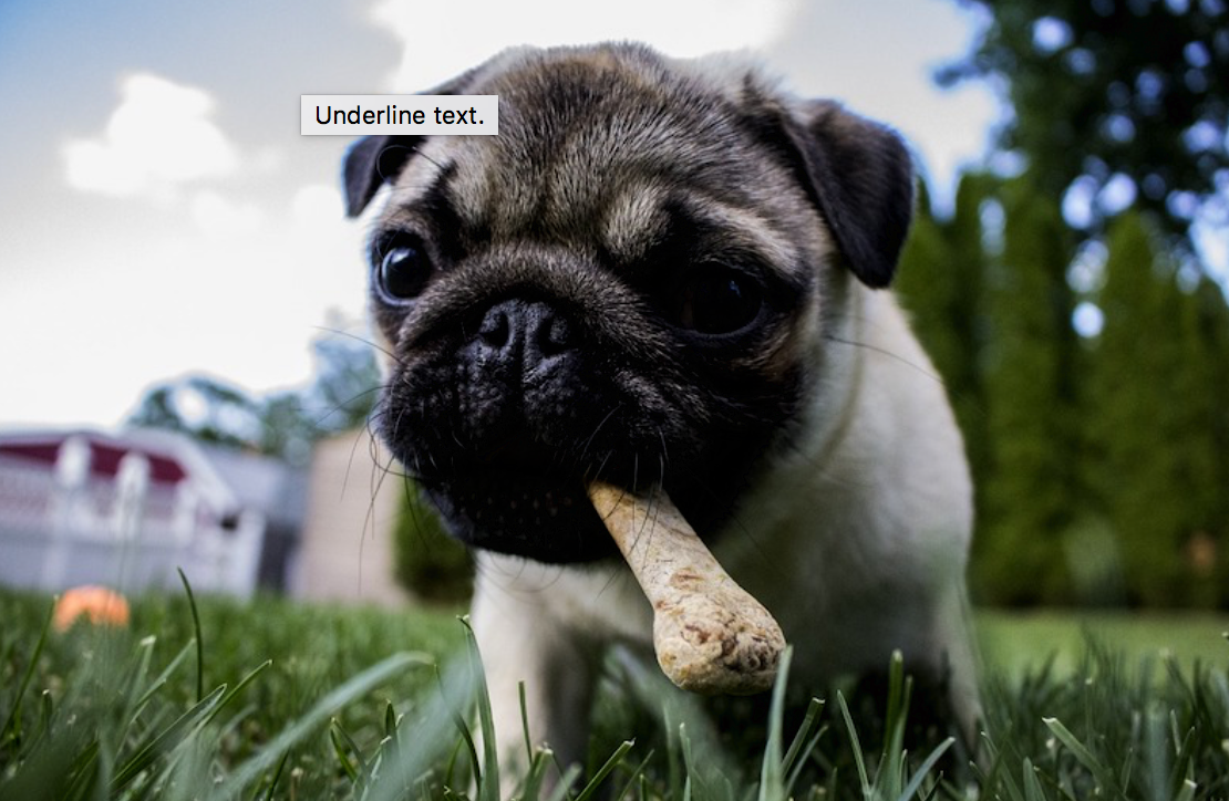 Do Dogs Change Their Eating Habits?