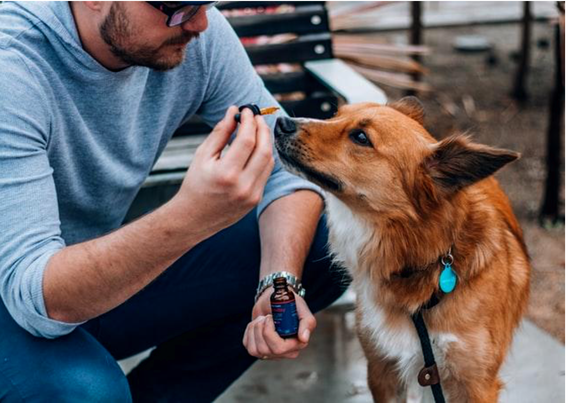 How CBD Supplements Can Help A Dog With Digestive Problems