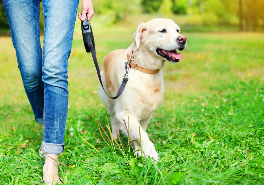 CBD for Pets: Is It the Best Option for My Dog?