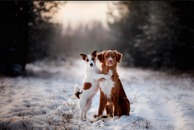 Prep Your Dog For Winter Now So You Are Prepared