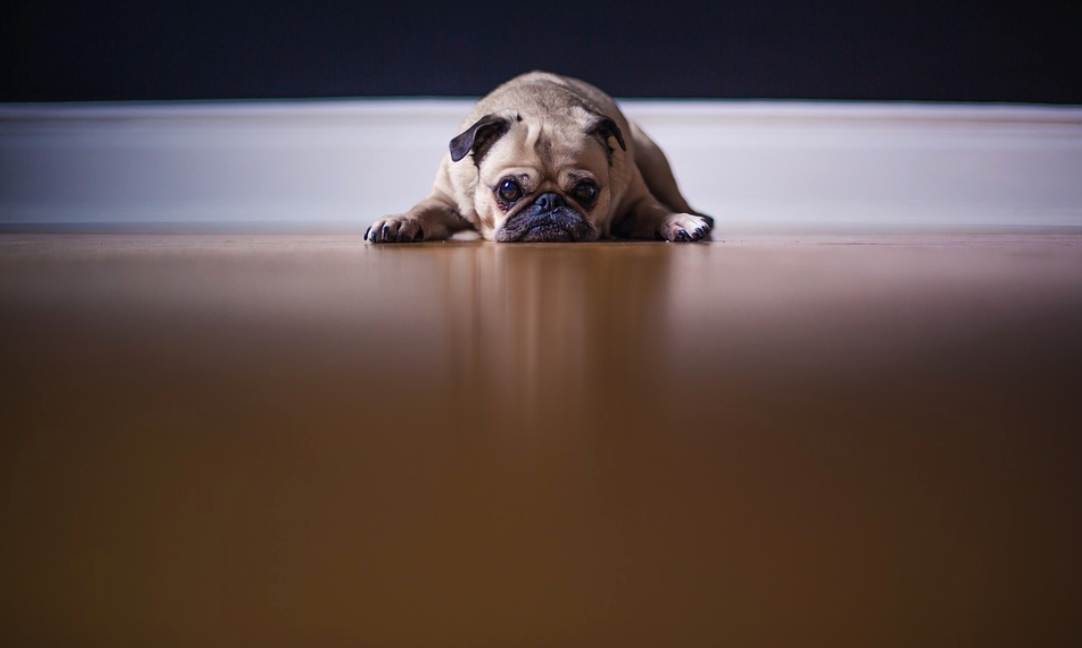 Dealing With Your Dog's Relocation Woes: Separation Anxiety, Motion-Sickness, and More