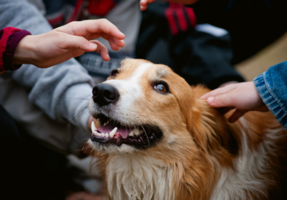 How to Train Your Dog to Be Calm around Strangers