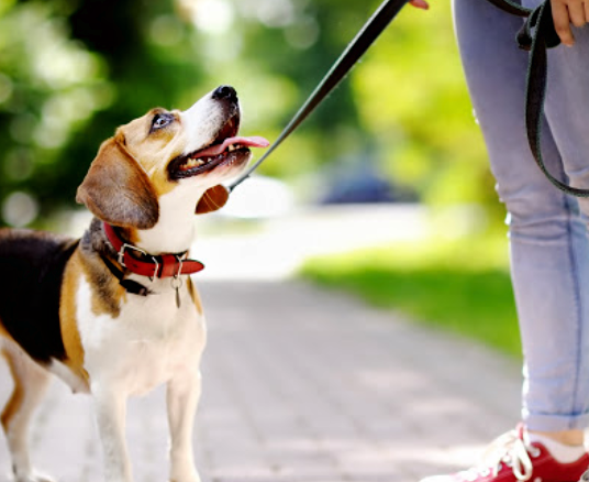 Why Is It Important to Walk Your Dog Every Day?
