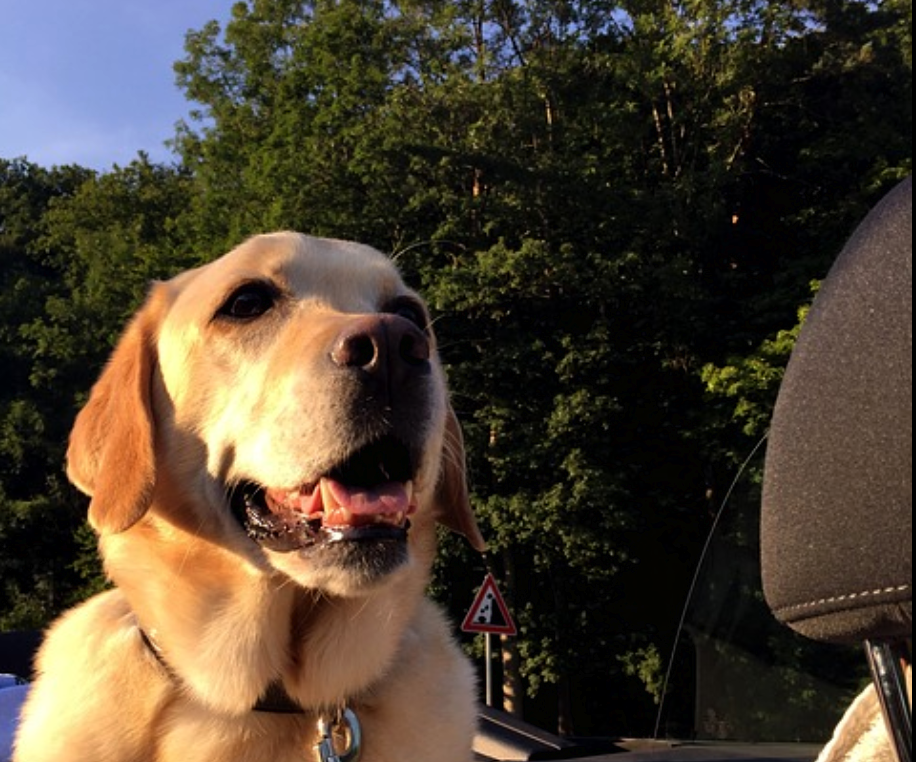 10 Tips For Epic Road Trips With Your Dog