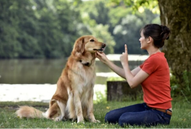 Taking Online Courses on How to Become A Professional Dog Trainer