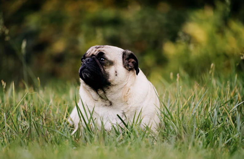 What To Do About Your Pet's Health