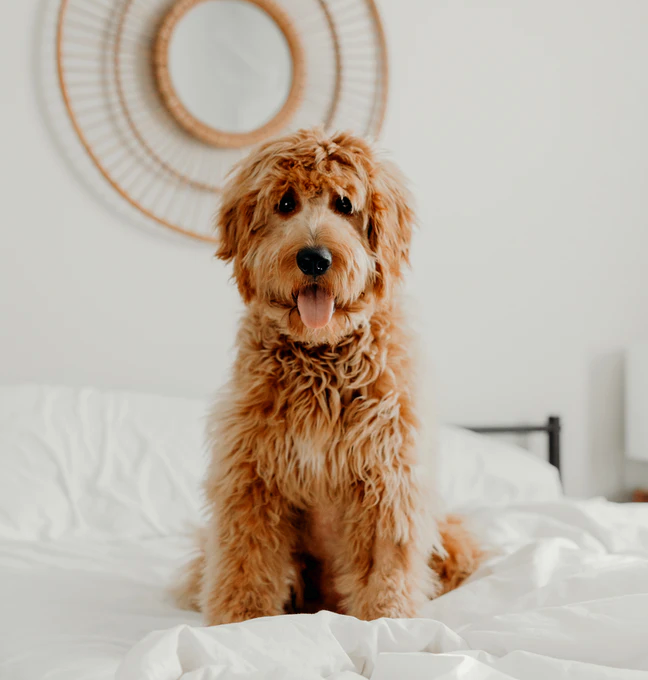 How to Protect Your Furniture From Your Dogs