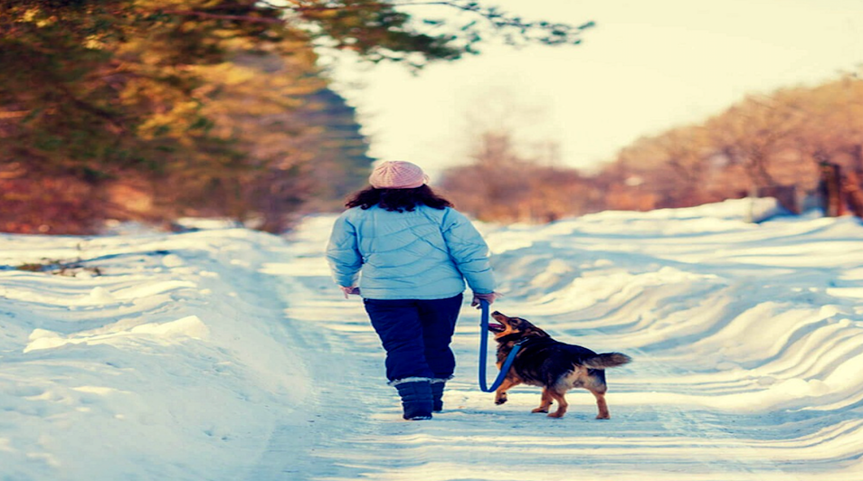 5 Tips to keep your dog healthy and happy in cold weather