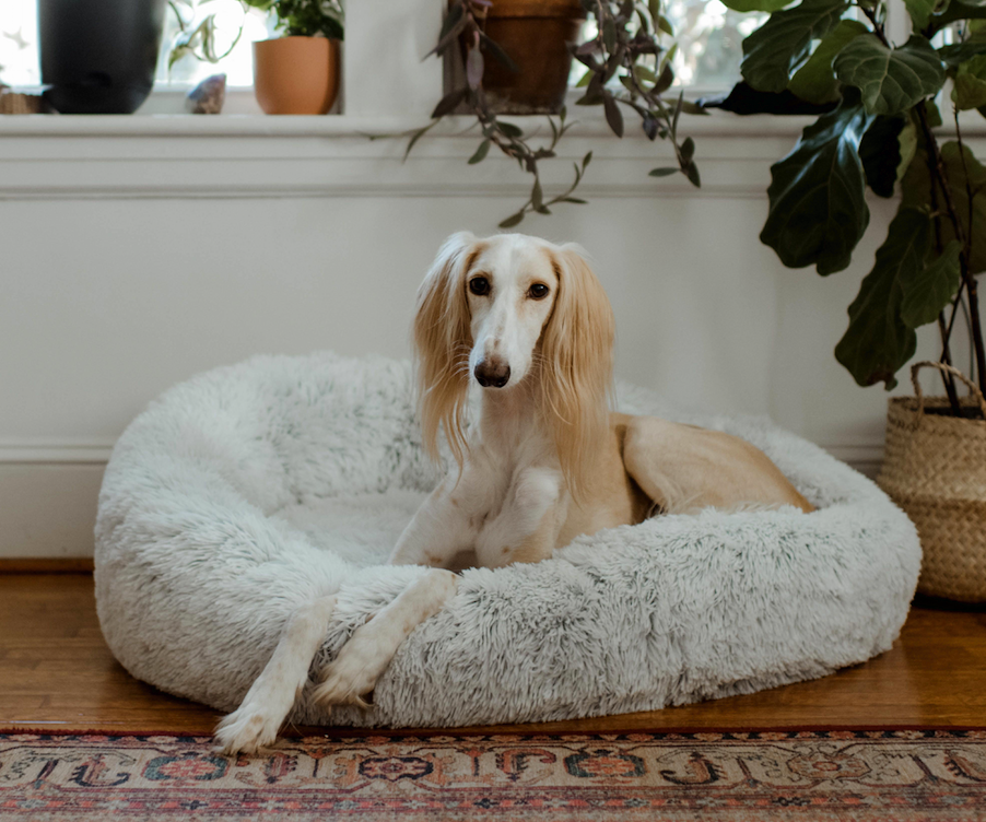 How to Clean Your Dog's Bed Properly