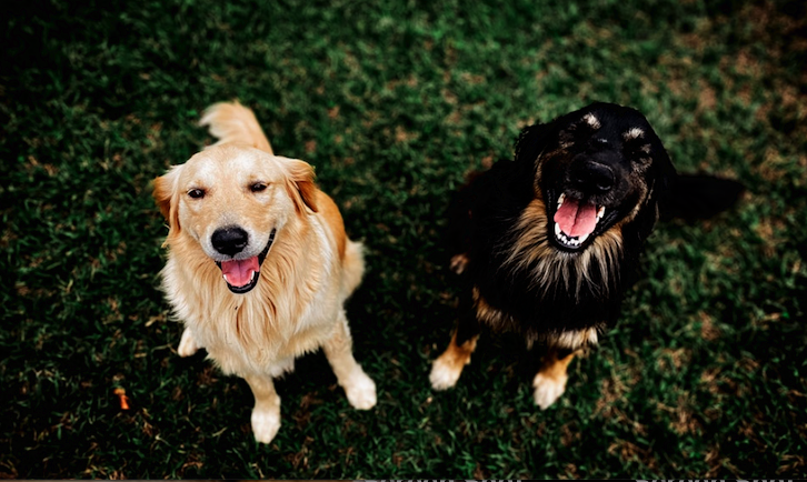 The Ultimate Guide to Dog Body Language