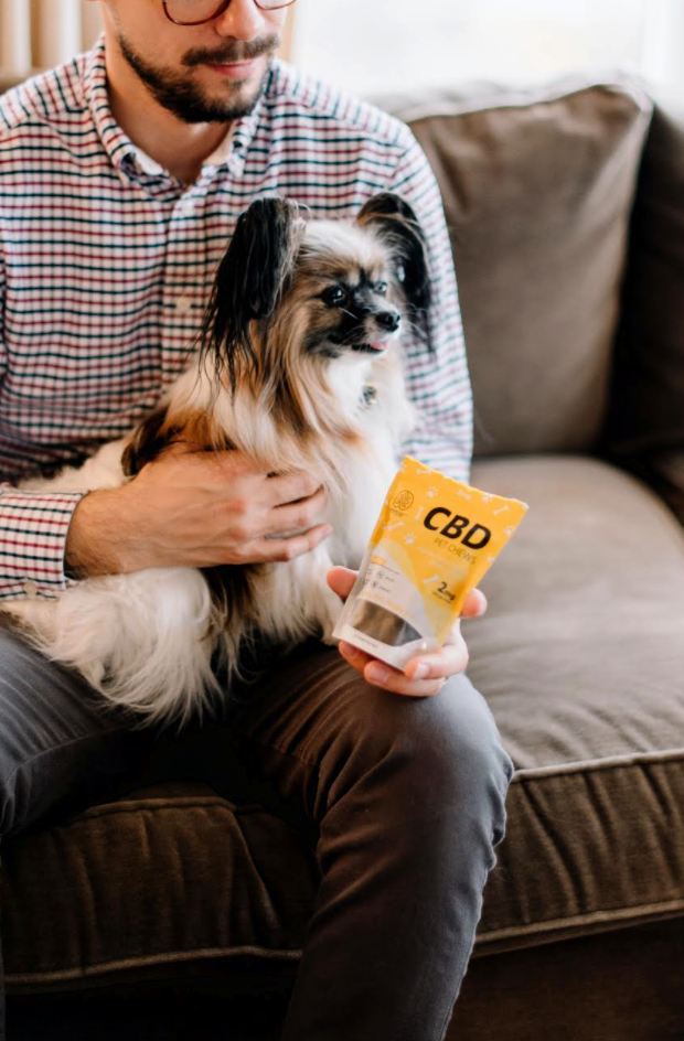 How to Pick the Right CBD for Your Dog