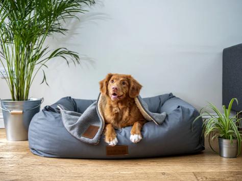 Dog's Wellness: 7 Tips To Keep Your Senior Dog Healthy