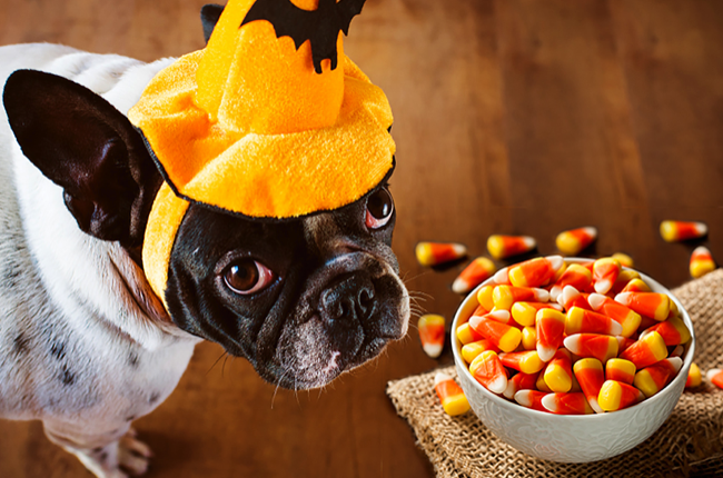 5 Toxic Foods To Avoid Feeding Dog: Know You Pet Food