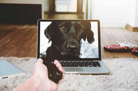 5 Ways Tech Can Make Owning a Pet Easier