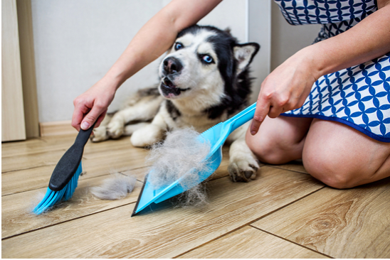 10 Handy Tips for Keeping a Super Clean Home Even Though You Have Pets