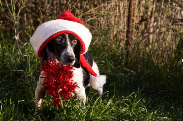 7 Exciting Ways To Celebrate 3 Day Weekends & Holidays With Your Pets