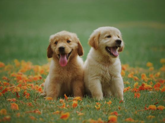 Love for Pets? Grow Yourself as a Pet Blogger