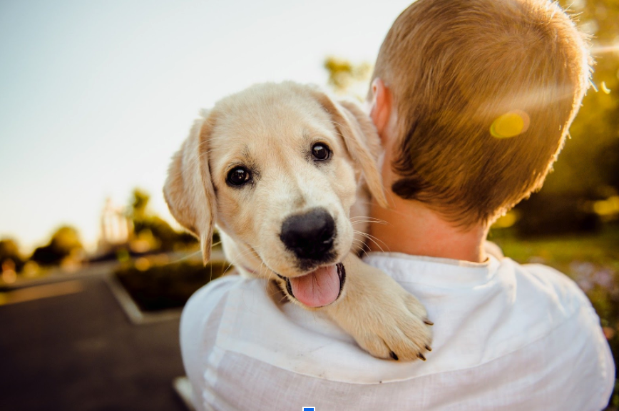 Tips to Improve Your Dog's Behavior