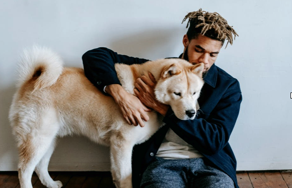 6 Tips for Maintaining Healthy Pets