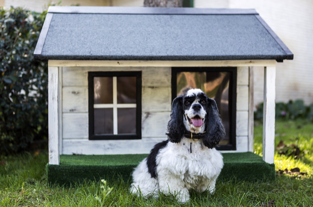 7 Tips For Moving With a Dog and Settling in Your New Home