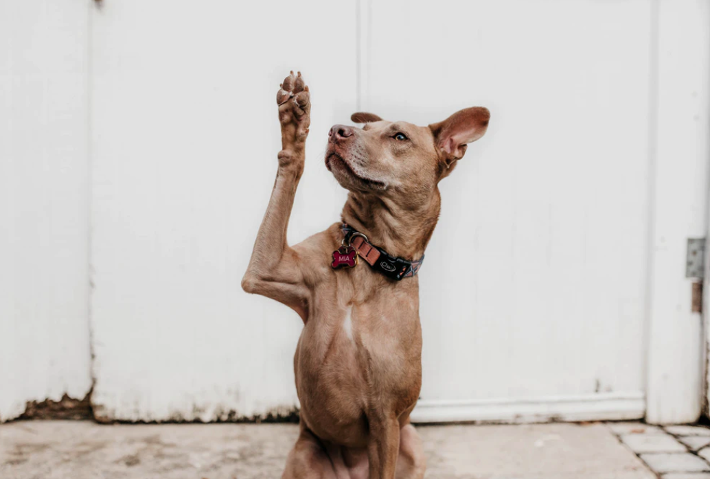 How Dog Behaviorists Use Markers and the Science Behind It