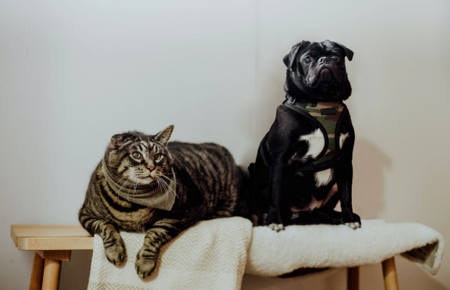Keeping the Peace: How to Separate Cats and Dogs