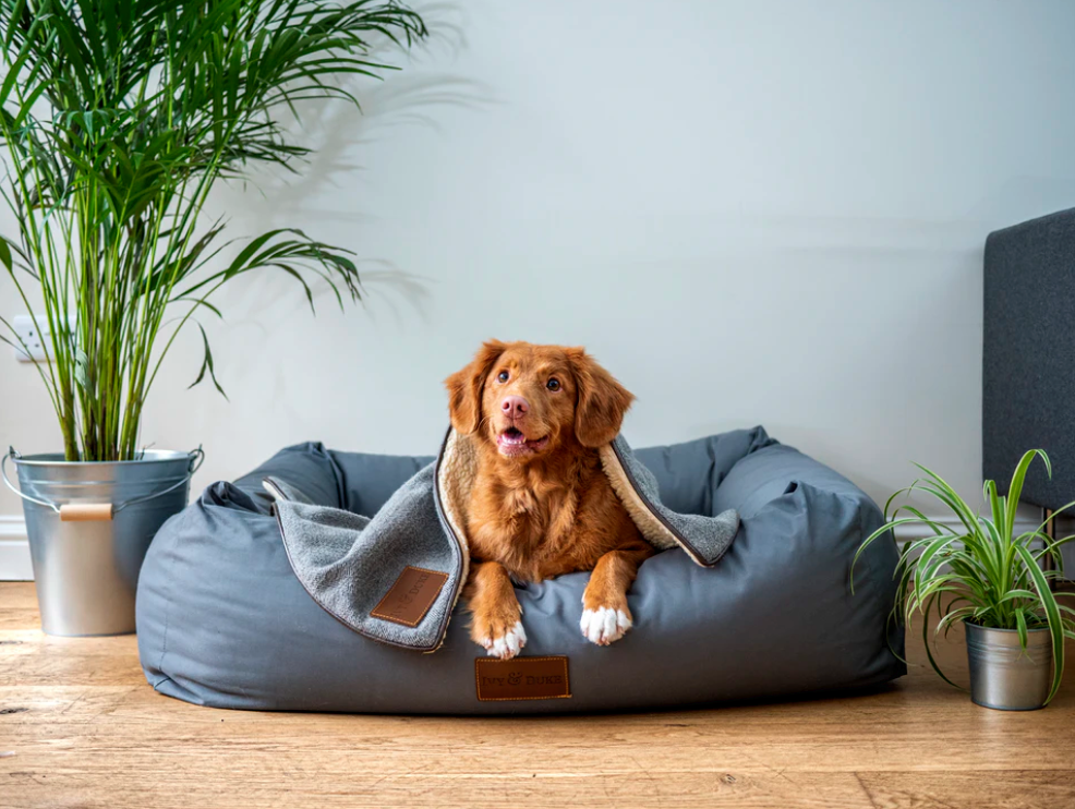 How to Help Your Dog Adjust to NYC Apartment Living