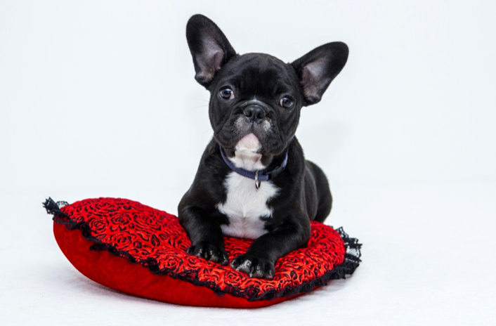 15 Brilliant Gifts for Bulldog Lovers