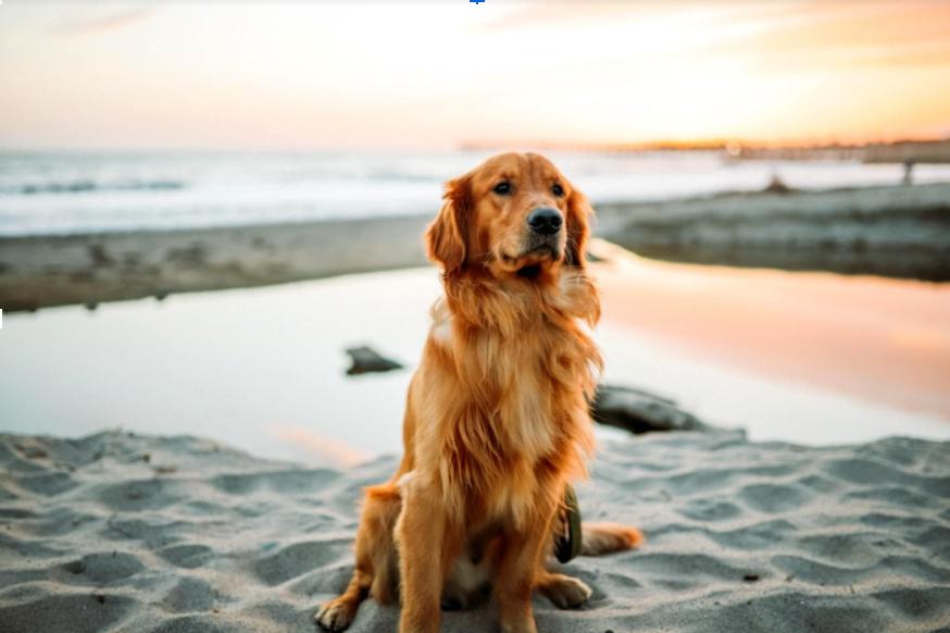 8 Steps to Write Better Pet Adoption Ads