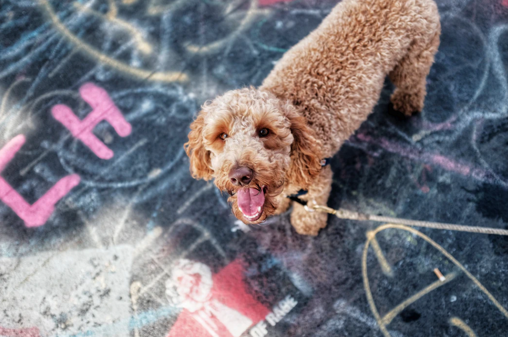 10 Tips For Moving to NYC With Pets