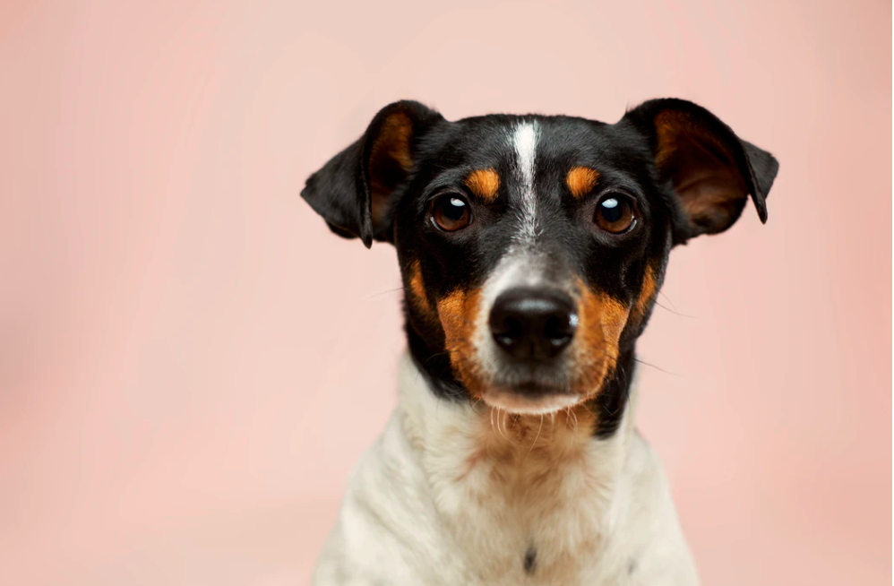Dog DNA Testing is Not Just a Fad, It's a Must–Here'sWhy