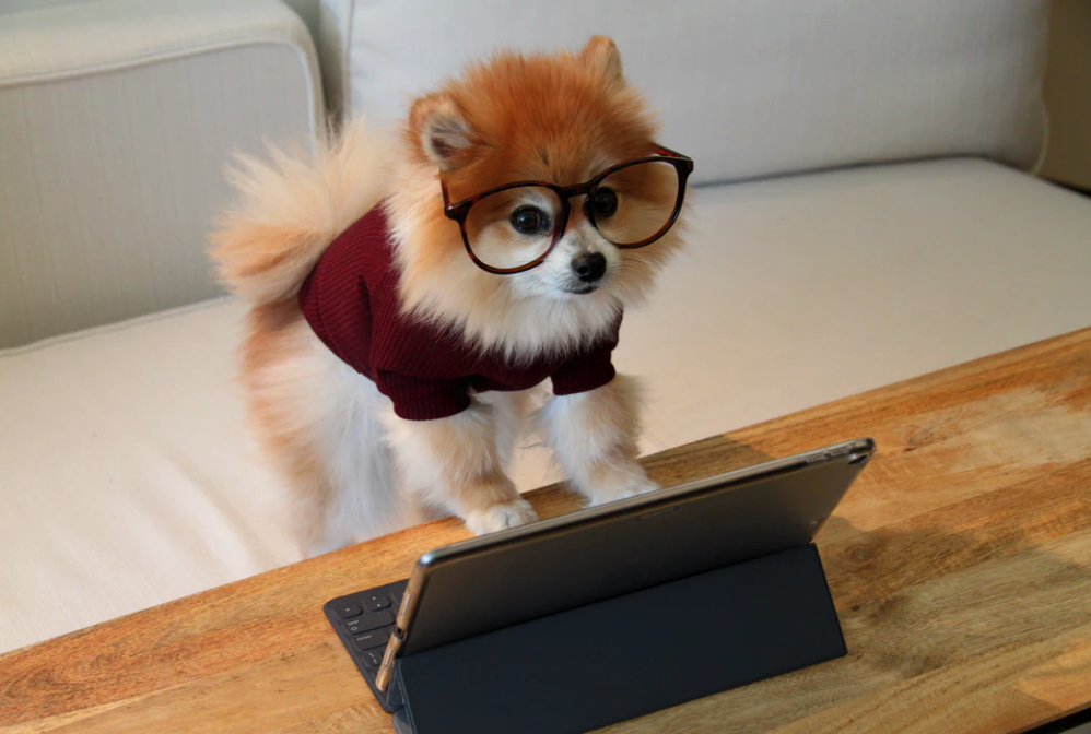 Want to Grow Your Dog Training Farm on Social Media? Do It