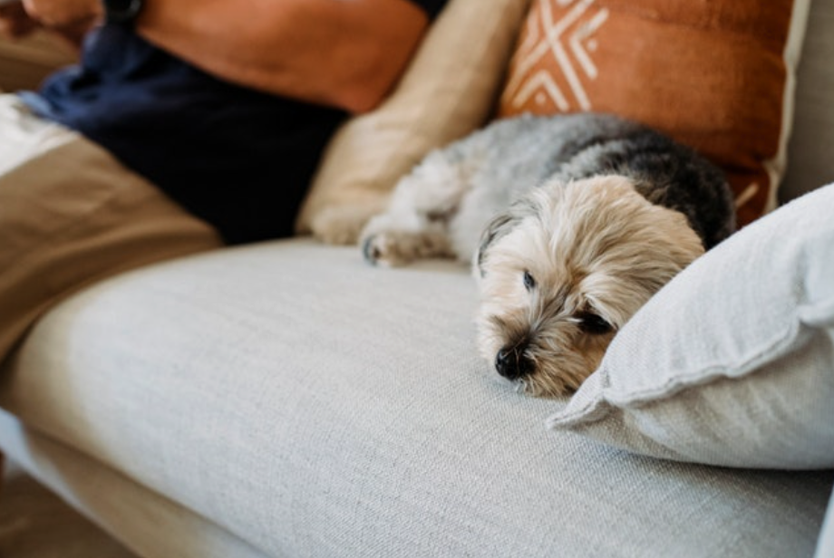 Ways to Recognize Your Dog is Low-Key Stressed Out