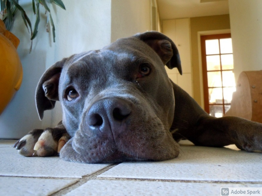 How to Handle Previously Abused Dogs: 8 Essential Tips