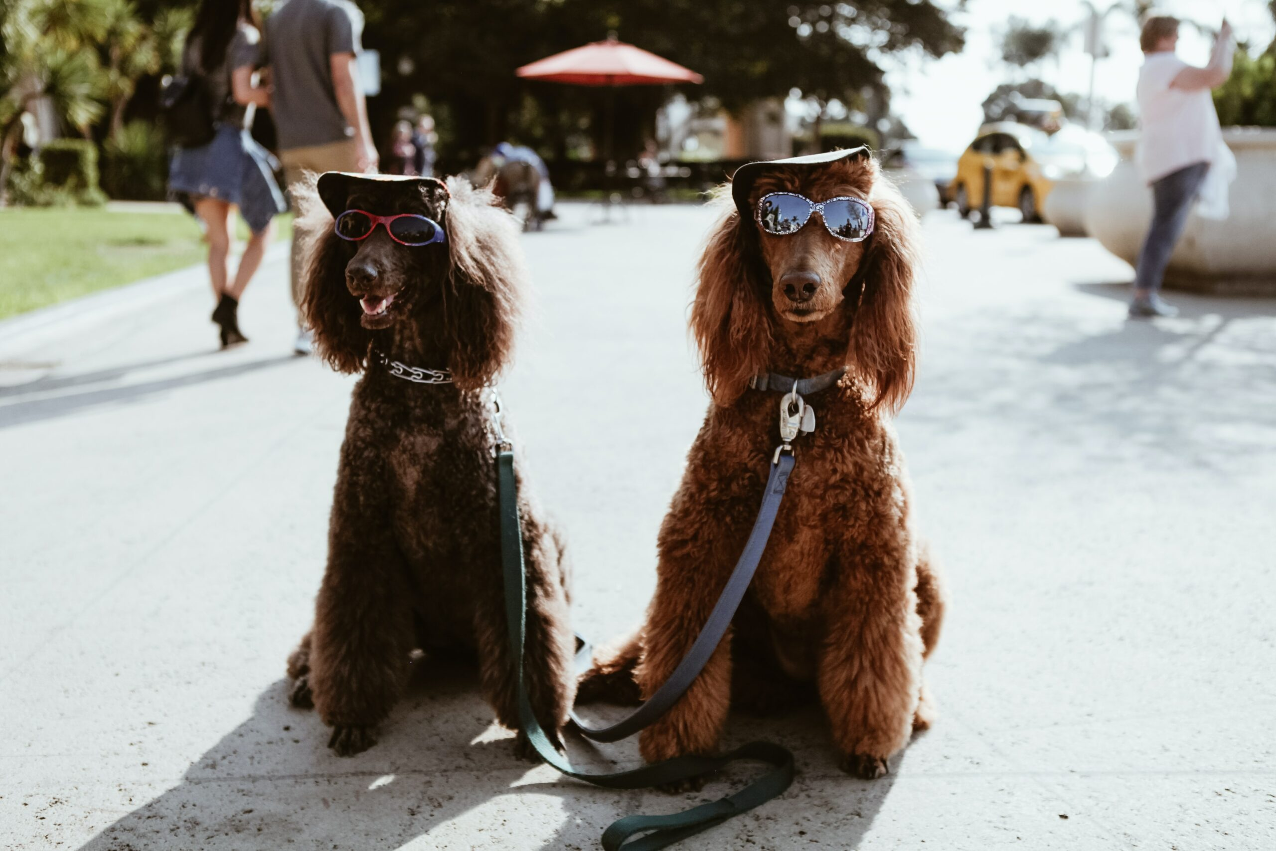 Keeping Your Dog Entertained While You're Away: 8 Simple Ways