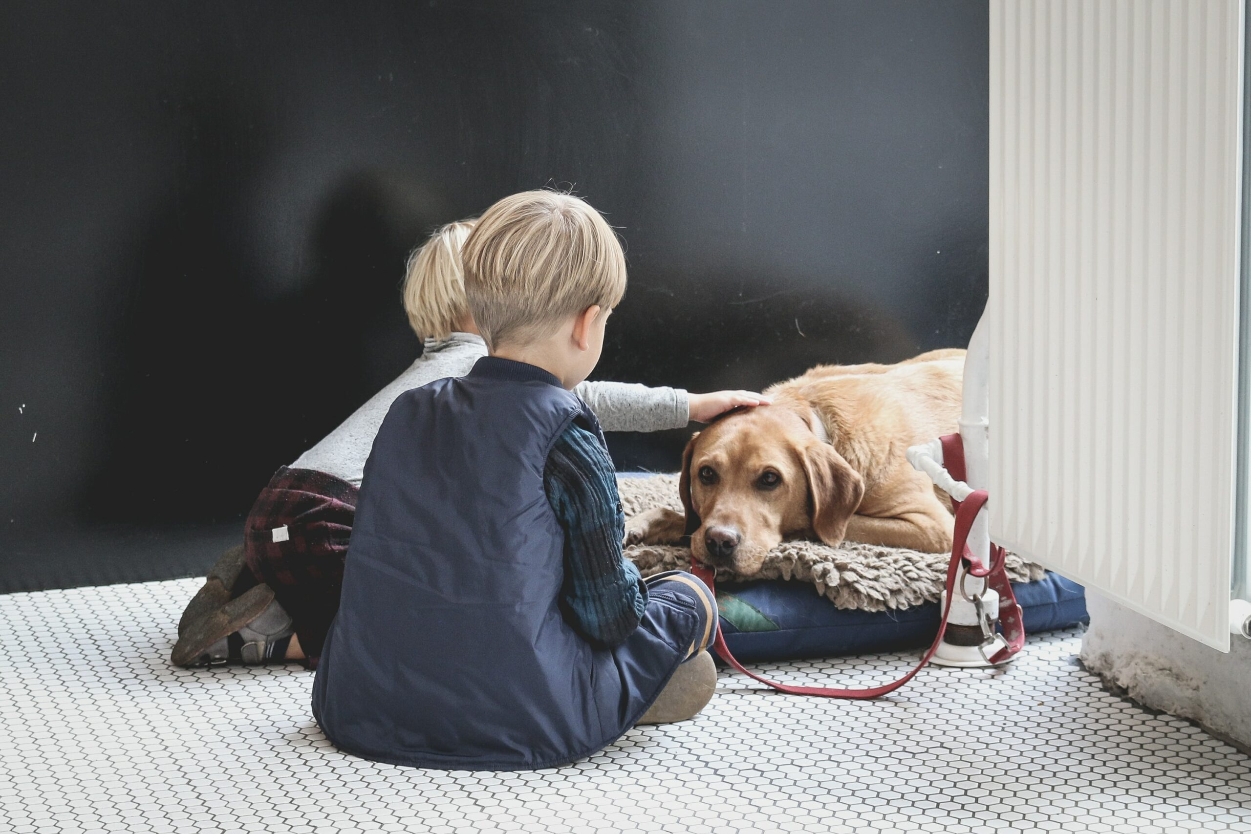 How to Train a Labrador to Play with Kids