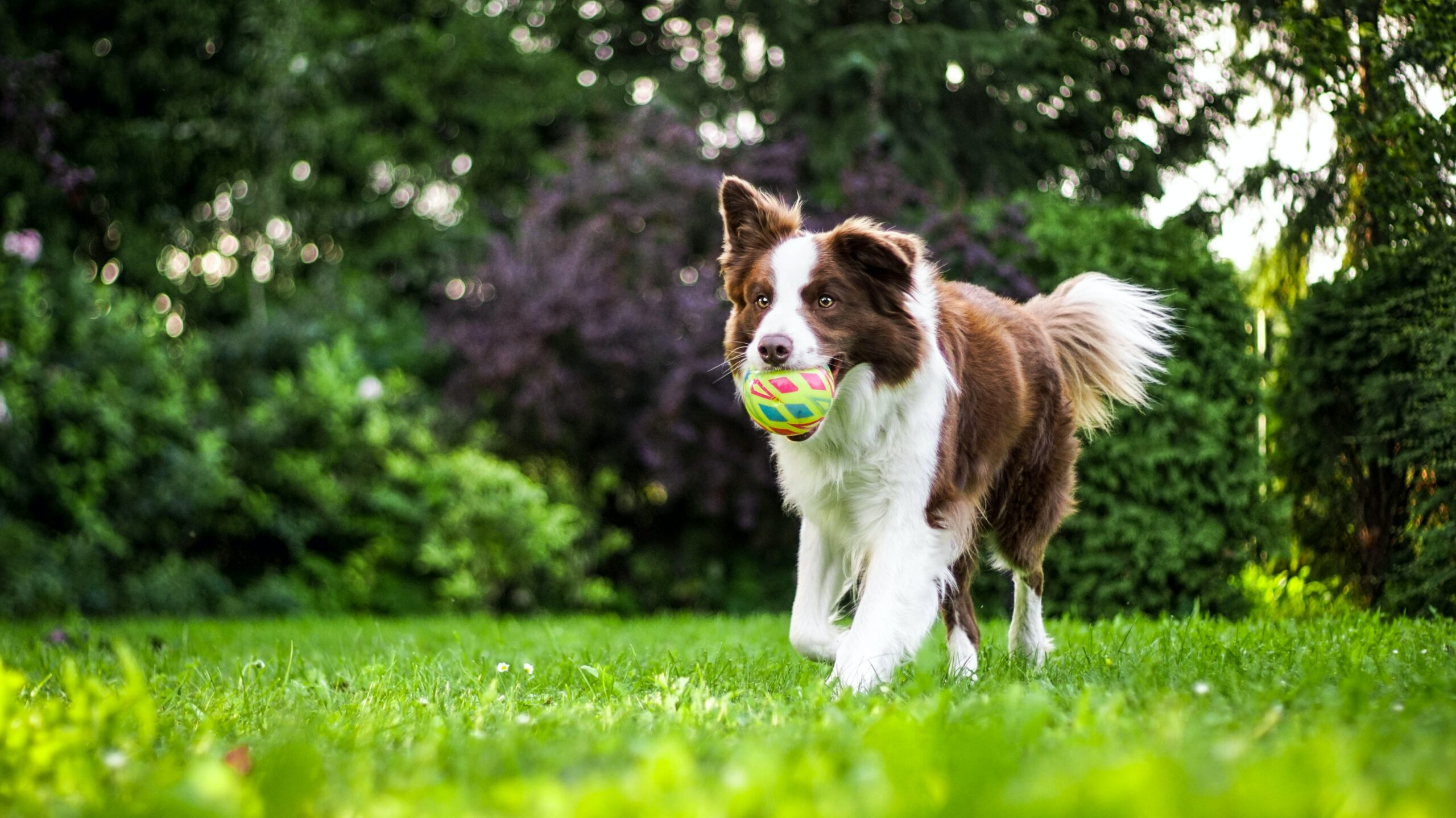 How to Choose Dog Joint Supplements