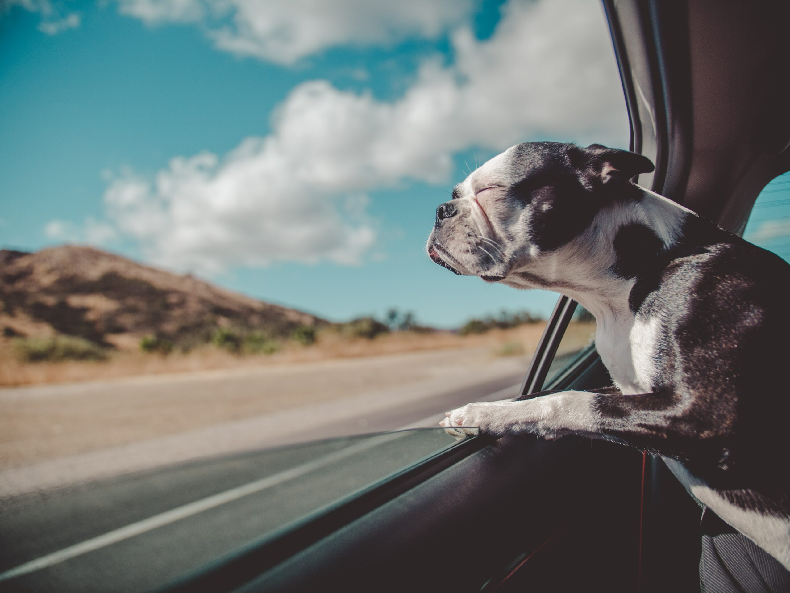 5 Ways To Claim Your Pet On Your Tax Returns